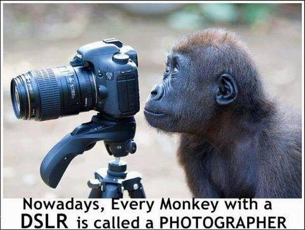 Monkey photographer